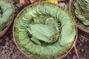 Kratom Quid- The Leaves Of Gold