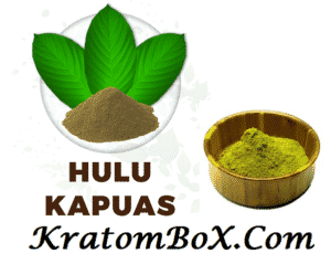 White Hulu Kapuas Kratom: Every Thing You Need to Know