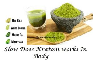 How Does Kratom Work In Body?