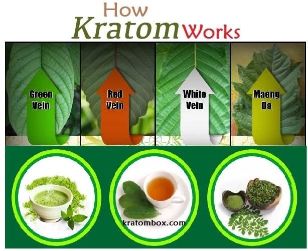 How kratom works in body