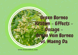 Green Borneo Kratom -The Ultimate Kratom Strain
