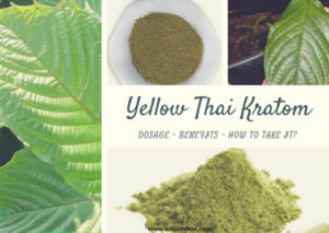 Yellow Thai Kratom – The Unusual Kratom Strain