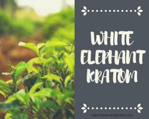White Elephant Kratom Contains A Highly Euphoric Profile