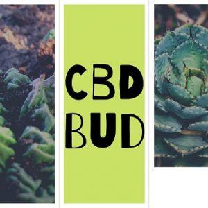 CBD Bud