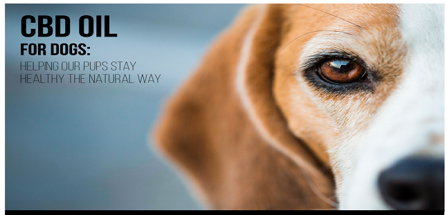 CBD Oil For Dogs Is The Natural Choice For Pet Care