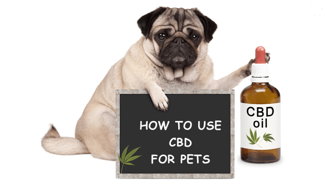 How-To-Use-CBD-for-Pets